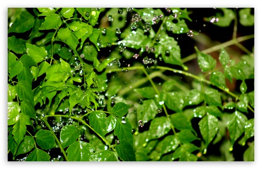 Splash HD wallpaper for Wide 16:10 5:3 Widescreen WHXGA WQXGA WUXGA WXGA WGA ; HD 16:9 High Definition WQHD QWXGA 1080p 900p 720p QHD nHD ; UHD 16:9 WQHD QWXGA 1080p 900p 720p QHD nHD ; Standard 4:3 5:4 3:2 Fullscreen UXGA XGA SVGA QSXGA SXGA DVGA HVGA HQVGA devices ( Apple PowerBook G4 iPhone 4 3G 3GS iPod Touch ) ; Tablet 1:1 ; iPad 1/2/Mini ; Mobile 4:3 5:3 3:2 16:9 5:4 - UXGA XGA SVGA WGA DVGA HVGA HQVGA devices ( Apple PowerBook G4 iPhone 4 3G 3GS iPod Touch ) WQHD QWXGA 1080p 900p 720p QHD nHD QSXGA SXGA ; Dual 16:10 5:3 16:9 4:3 5:4 WHXGA WQXGA WUXGA WXGA WGA WQHD QWXGA 1080p 900p 720p QHD nHD UXGA XGA SVGA QSXGA SXGA ;
