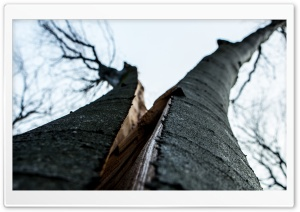 Split Tree HD Wide Wallpaper for Widescreen