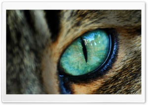 Spooky Eye HD Wide Wallpaper for Widescreen