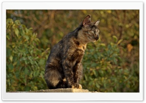 Spotted Cat HD Wide Wallpaper for Widescreen