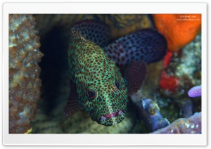 Spotted Fish HD Wide Wallpaper for Widescreen
