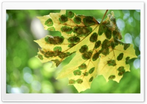 Spotted Leaf Ultra HD Wallpaper for 4K UHD Widescreen desktop, tablet & smartphone