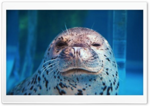 Spotted Seal Winking HD Wide Wallpaper for 4K UHD Widescreen desktop & smartphone