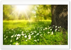 Spring HD Wide Wallpaper for Widescreen