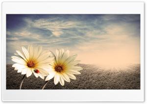 Spring Ultra HD Wallpaper for 4K UHD Widescreen desktop, tablet & smartphone
