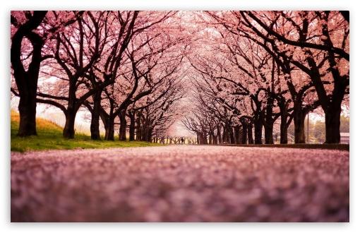 Download Spring HD Wallpaper