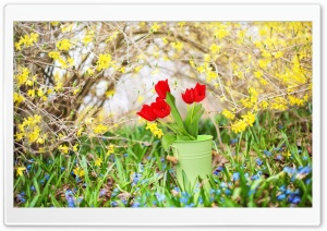 Spring Background HD Wide Wallpaper for Widescreen
