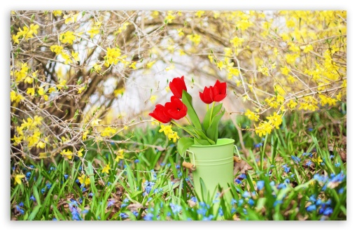 Spring Background ❤ 4K UHD Wallpaper for Wide 16:10 5:3 Widescreen WHXGA WQXGA WUXGA WXGA WGA ; UltraWide 21:9 24:10 ; 4K UHD 16:9 Ultra High Definition 2160p 1440p 1080p 900p 720p ; UHD 16:9 2160p 1440p 1080p 900p 720p ; Standard 4:3 5:4 3:2 Fullscreen UXGA XGA SVGA QSXGA SXGA DVGA HVGA HQVGA ( Apple PowerBook G4 iPhone 4 3G 3GS iPod Touch ) ; Smartphone 16:9 3:2 5:3 2160p 1440p 1080p 900p 720p DVGA HVGA HQVGA ( Apple PowerBook G4 iPhone 4 3G 3GS iPod Touch ) WGA ; Tablet 1:1 ; iPad 1/2/Mini ; Mobile 4:3 5:3 3:2 16:9 5:4 - UXGA XGA SVGA WGA DVGA HVGA HQVGA ( Apple PowerBook G4 iPhone 4 3G 3GS iPod Touch ) 2160p 1440p 1080p 900p 720p QSXGA SXGA ; Dual 16:10 5:3 16:9 4:3 5:4 3:2 WHXGA WQXGA WUXGA WXGA WGA 2160p 1440p 1080p 900p 720p UXGA XGA SVGA QSXGA SXGA DVGA HVGA HQVGA ( Apple PowerBook G4 iPhone 4 3G 3GS iPod Touch ) ; Triple 16:10 5:3 16:9 4:3 5:4 3:2 WHXGA WQXGA WUXGA WXGA WGA 2160p 1440p 1080p 900p 720p UXGA XGA SVGA QSXGA SXGA DVGA HVGA HQVGA ( Apple PowerBook G4 iPhone 4 3G 3GS iPod Touch ) ;