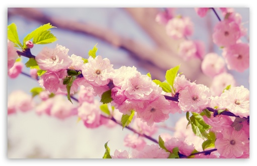 Spring Blossom ❤ 4K UHD Wallpaper for Wide 16:10 5:3 Widescreen WHXGA WQXGA WUXGA WXGA WGA ; 4K UHD 16:9 Ultra High Definition 2160p 1440p 1080p 900p 720p ; Standard 4:3 5:4 3:2 Fullscreen UXGA XGA SVGA QSXGA SXGA DVGA HVGA HQVGA ( Apple PowerBook G4 iPhone 4 3G 3GS iPod Touch ) ; Tablet 1:1 ; iPad 1/2/Mini ; Mobile 4:3 5:3 3:2 16:9 5:4 - UXGA XGA SVGA WGA DVGA HVGA HQVGA ( Apple PowerBook G4 iPhone 4 3G 3GS iPod Touch ) 2160p 1440p 1080p 900p 720p QSXGA SXGA ; Dual 5:4 QSXGA SXGA ;