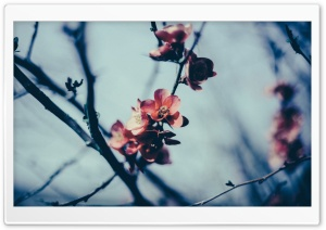 Spring Blossom, Gloomy Day HD Wide Wallpaper for Widescreen