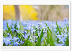 Spring Blue Flowers HD Wide Wallpaper for Widescreen