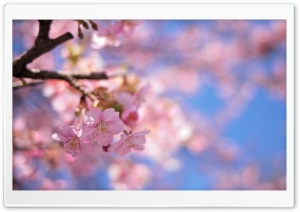Spring Colors HD Wide Wallpaper for Widescreen