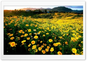 Spring comes early to southern California HD Wide Wallpaper for Widescreen