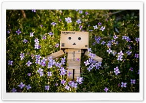 Spring Danbo HD Wide Wallpaper for Widescreen