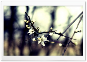 Spring Dreaming HD Wide Wallpaper for Widescreen