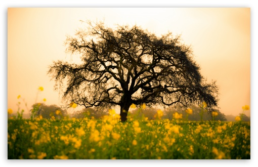 Spring Field HD wallpaper for Standard 4:3 5:4 Fullscreen UXGA XGA SVGA QSXGA SXGA ; Wide 16:10 5:3 Widescreen WHXGA WQXGA WUXGA WXGA WGA ; HD 16:9 High Definition WQHD QWXGA 1080p 900p 720p QHD nHD ; Other 3:2 DVGA HVGA HQVGA devices ( Apple PowerBook G4 iPhone 4 3G 3GS iPod Touch ) ; Mobile VGA WVGA iPhone iPad PSP Phone - VGA QVGA Smartphone ( PocketPC GPS iPod Zune BlackBerry HTC Samsung LG Nokia Eten Asus ) WVGA WQVGA Smartphone ( HTC Samsung Sony Ericsson LG Vertu MIO ) HVGA Smartphone ( Apple iPhone iPod BlackBerry HTC Samsung Nokia ) Sony PSP Zune HD Zen ; Tablet 2 Android 3 DVGA HVGA HQVGA devices ( Apple PowerBook G4 iPhone 4 3G 3GS iPod Touch ) ; Dual 4:3 5:4 16:10 5:3 UXGA XGA SVGA QSXGA SXGA WHXGA WQXGA WUXGA WXGA WGA ;