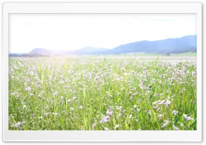 Spring Field HD Wide Wallpaper for Widescreen