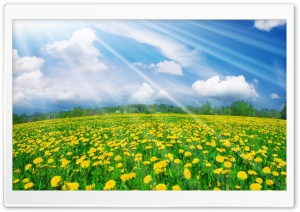 Spring Field HD Wide Wallpaper for 4K UHD Widescreen desktop & smartphone
