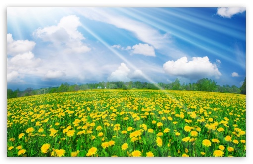 Spring Field HD wallpaper for Wide 16:10 5:3 Widescreen WHXGA WQXGA WUXGA WXGA WGA ; HD 16:9 High Definition WQHD QWXGA 1080p 900p 720p QHD nHD ; Standard 4:3 5:4 3:2 Fullscreen UXGA XGA SVGA QSXGA SXGA DVGA HVGA HQVGA devices ( Apple PowerBook G4 iPhone 4 3G 3GS iPod Touch ) ; Tablet 1:1 ; iPad 1/2/Mini ; Mobile 4:3 5:3 3:2 16:9 5:4 - UXGA XGA SVGA WGA DVGA HVGA HQVGA devices ( Apple PowerBook G4 iPhone 4 3G 3GS iPod Touch ) WQHD QWXGA 1080p 900p 720p QHD nHD QSXGA SXGA ;