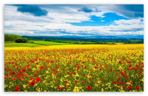 Spring Field ❤ 4K UHD Wallpaper for Wide 16:10 5:3 Widescreen WHXGA WQXGA WUXGA WXGA WGA ; 4K UHD 16:9 Ultra High Definition 2160p 1440p 1080p 900p 720p ; Standard 4:3 5:4 3:2 Fullscreen UXGA XGA SVGA QSXGA SXGA DVGA HVGA HQVGA ( Apple PowerBook G4 iPhone 4 3G 3GS iPod Touch ) ; Tablet 1:1 ; iPad 1/2/Mini ; Mobile 4:3 5:3 3:2 16:9 5:4 - UXGA XGA SVGA WGA DVGA HVGA HQVGA ( Apple PowerBook G4 iPhone 4 3G 3GS iPod Touch ) 2160p 1440p 1080p 900p 720p QSXGA SXGA ;