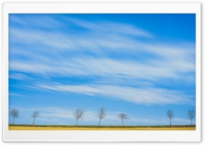 Spring, Field, Row of Trees, Skyline Ultra HD Wallpaper for 4K UHD Widescreen desktop, tablet & smartphone