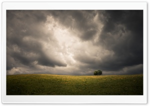 Spring, Field, Two Tree, Storm Clouds, Dark Sky Ultra HD Wallpaper for 4K UHD Widescreen desktop, tablet & smartphone