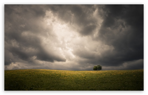 Spring, Field, Two Tree, Storm Clouds, Dark Sky UltraHD Wallpaper for Wide 16:10 5:3 Widescreen WHXGA WQXGA WUXGA WXGA WGA ; UltraWide 21:9 24:10 ; 8K UHD TV 16:9 Ultra High Definition 2160p 1440p 1080p 900p 720p ; UHD 16:9 2160p 1440p 1080p 900p 720p ; Standard 4:3 5:4 3:2 Fullscreen UXGA XGA SVGA QSXGA SXGA DVGA HVGA HQVGA ( Apple PowerBook G4 iPhone 4 3G 3GS iPod Touch ) ; Smartphone 16:9 3:2 5:3 2160p 1440p 1080p 900p 720p DVGA HVGA HQVGA ( Apple PowerBook G4 iPhone 4 3G 3GS iPod Touch ) WGA ; Tablet 1:1 ; iPad 1/2/Mini ; Mobile 4:3 5:3 3:2 16:9 5:4 - UXGA XGA SVGA WGA DVGA HVGA HQVGA ( Apple PowerBook G4 iPhone 4 3G 3GS iPod Touch ) 2160p 1440p 1080p 900p 720p QSXGA SXGA ; Dual 16:10 5:3 16:9 4:3 5:4 3:2 WHXGA WQXGA WUXGA WXGA WGA 2160p 1440p 1080p 900p 720p UXGA XGA SVGA QSXGA SXGA DVGA HVGA HQVGA ( Apple PowerBook G4 iPhone 4 3G 3GS iPod Touch ) ;