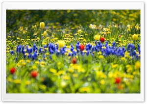Spring Fling HD Wide Wallpaper for Widescreen