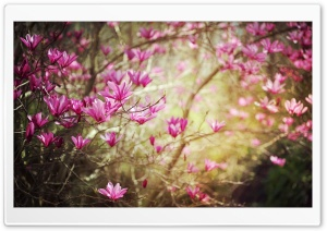 Spring Flower HD Wide Wallpaper for Widescreen