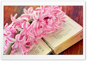 Spring Flower Open Old Book HD Wide Wallpaper for Widescreen