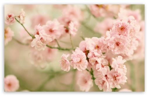 Spring Flowers UltraHD Wallpaper for Wide 16:10 5:3 Widescreen WHXGA WQXGA WUXGA WXGA WGA ; 8K UHD TV 16:9 Ultra High Definition 2160p 1440p 1080p 900p 720p ; Standard 4:3 5:4 3:2 Fullscreen UXGA XGA SVGA QSXGA SXGA DVGA HVGA HQVGA ( Apple PowerBook G4 iPhone 4 3G 3GS iPod Touch ) ; Smartphone 16:9 3:2 5:3 2160p 1440p 1080p 900p 720p DVGA HVGA HQVGA ( Apple PowerBook G4 iPhone 4 3G 3GS iPod Touch ) WGA ; Tablet 1:1 ; iPad 1/2/Mini ; Mobile 4:3 5:3 3:2 16:9 5:4 - UXGA XGA SVGA WGA DVGA HVGA HQVGA ( Apple PowerBook G4 iPhone 4 3G 3GS iPod Touch ) 2160p 1440p 1080p 900p 720p QSXGA SXGA ;