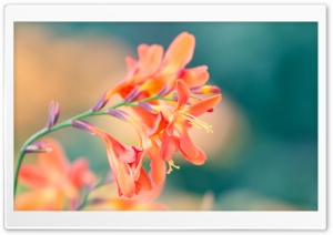 Spring Flowers HD Wide Wallpaper for Widescreen