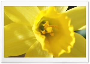 Spring Flowers Ultra HD Wallpaper for 4K UHD Widescreen desktop, tablet & smartphone