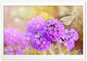 Spring Flowers and Butterflies HD Wide Wallpaper for Widescreen