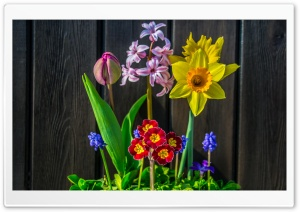 Spring Flowers Background HD Wide Wallpaper for Widescreen