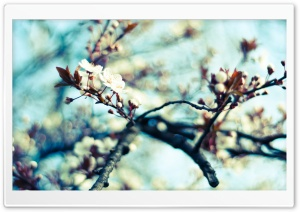 Spring Flowers Branch HD Wide Wallpaper for Widescreen