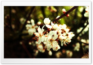 Spring Flowers Bundle HD Wide Wallpaper for Widescreen