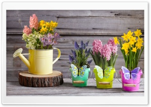 Spring Flowers Collection HD Wide Wallpaper for Widescreen