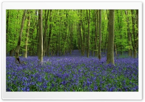 Spring Flowers, Green Trees, Forest Ultra HD Wallpaper for 4K UHD Widescreen desktop, tablet & smartphone