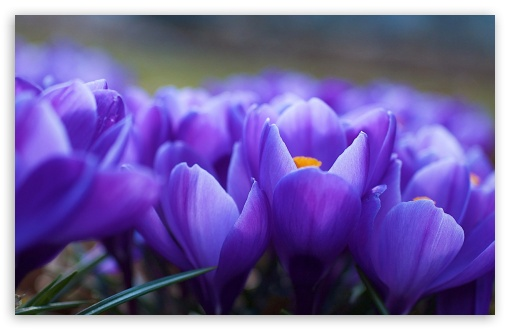 Spring Flowers Macro HD wallpaper for Standard 4:3 5:4 Fullscreen UXGA XGA SVGA QSXGA SXGA ; Wide 16:10 5:3 Widescreen WHXGA WQXGA WUXGA WXGA WGA ; HD 16:9 High Definition WQHD QWXGA 1080p 900p 720p QHD nHD ; Other 3:2 DVGA HVGA HQVGA devices ( Apple PowerBook G4 iPhone 4 3G 3GS iPod Touch ) ; Mobile VGA WVGA iPhone iPad PSP Phone - VGA QVGA Smartphone ( PocketPC GPS iPod Zune BlackBerry HTC Samsung LG Nokia Eten Asus ) WVGA WQVGA Smartphone ( HTC Samsung Sony Ericsson LG Vertu MIO ) HVGA Smartphone ( Apple iPhone iPod BlackBerry HTC Samsung Nokia ) Sony PSP Zune HD Zen ; Tablet 2 ;