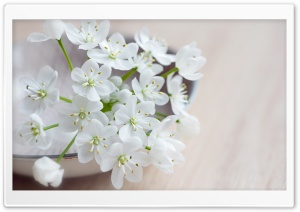 Spring Flowers Macro HD Wide Wallpaper for Widescreen