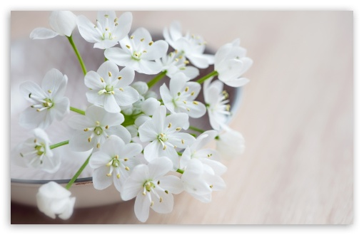 Spring Flowers Macro UltraHD Wallpaper for Wide 16:10 5:3 Widescreen WHXGA WQXGA WUXGA WXGA WGA ; 8K UHD TV 16:9 Ultra High Definition 2160p 1440p 1080p 900p 720p ; Standard 4:3 5:4 3:2 Fullscreen UXGA XGA SVGA QSXGA SXGA DVGA HVGA HQVGA ( Apple PowerBook G4 iPhone 4 3G 3GS iPod Touch ) ; Smartphone 5:3 WGA ; Tablet 1:1 ; iPad 1/2/Mini ; Mobile 4:3 5:3 3:2 16:9 5:4 - UXGA XGA SVGA WGA DVGA HVGA HQVGA ( Apple PowerBook G4 iPhone 4 3G 3GS iPod Touch ) 2160p 1440p 1080p 900p 720p QSXGA SXGA ; Dual 16:10 5:3 4:3 5:4 WHXGA WQXGA WUXGA WXGA WGA UXGA XGA SVGA QSXGA SXGA ;