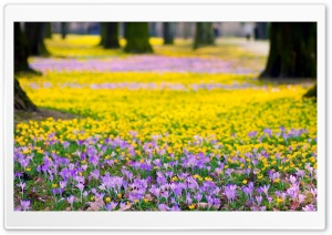 Spring Flowers Meadow HD Wide Wallpaper for 4K UHD Widescreen desktop & smartphone
