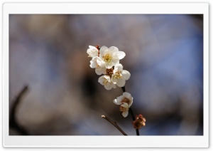 Spring Flowers Twig HD Wide Wallpaper for Widescreen