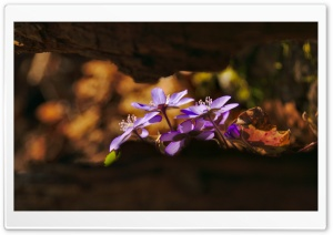 Spring Forest Flowers HD Wide Wallpaper for Widescreen