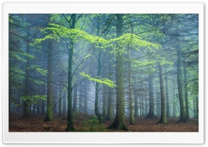 Spring Forest In Fog HD Wide Wallpaper for 4K UHD Widescreen desktop & smartphone