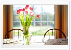 Spring Fresh Cut Tulips Flowers in Vase HD Wide Wallpaper for Widescreen
