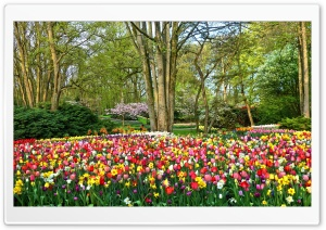 Spring Gardens in Holland HD Wide Wallpaper for 4K UHD Widescreen desktop & smartphone