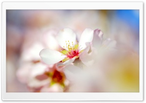 Spring Glow HD Wide Wallpaper for Widescreen
