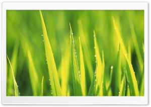 Spring Grass HD Wide Wallpaper for 4K UHD Widescreen desktop & smartphone